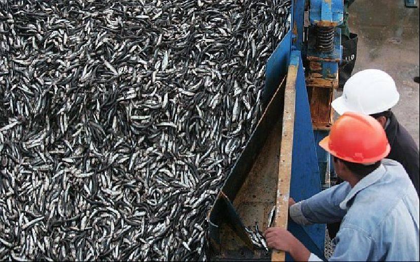 El aceite el cáñamo para la pesca