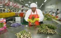 Exportación de espárragos creció 11% en los últimos 10 años
