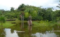 Pizango: Indígenas pedirán 20 millones de hectáreas de la Amazonía