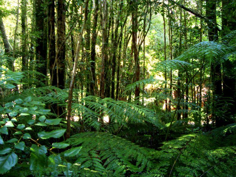 Cambio climático: inversión en bosques nativos