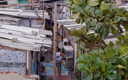 Zika: Brasil usará contra virus mosquitos esterilizados por radiación | FOTOS