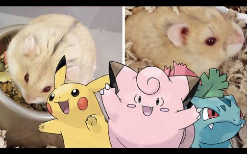 'Pokémon GO' salva vida de unos inocentes animales: conoce aquí esta tierna historia
