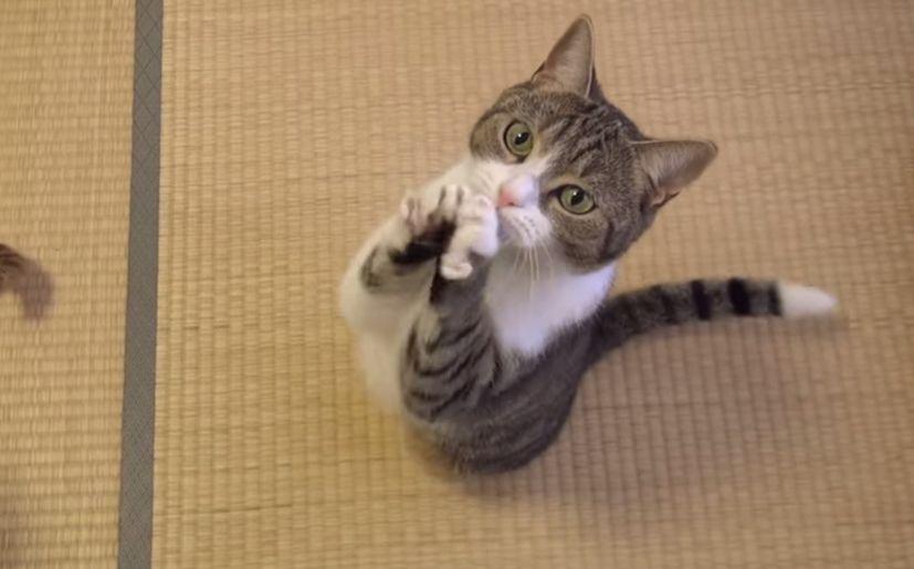 YouTube: Los 11 videos virales de animales más graciosos