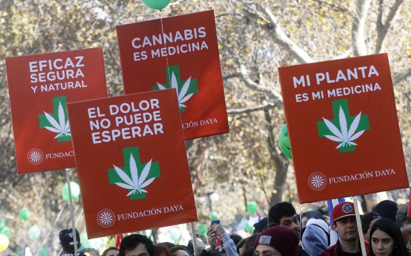 Cannabis medicinal: la ley aún no se aplica