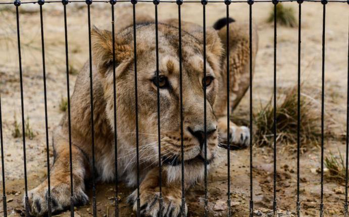 Llegó La Hora De Cerrar Los Zoológicos Animales Medio