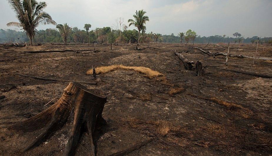 """Vista de los daños producto del incendio en la selva amazónica este lunes, en Porto Velho. Brasil insiste en que la situación generada por los llamas en la Amazonía ha sido """"exagerada"""" por """"cuestiones políticas"""" . (Foto: EFE/Joédson Alves)"""